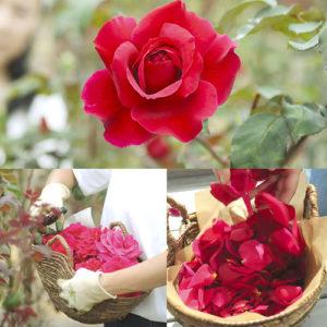 スイーツに使われているのは奥出雲薔薇園で有機肥料・無農薬で大切に育てられたバラ「さ姫」
