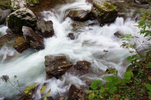 良質なうなぎを育てるには綺麗な水が豊富にあることが大事